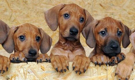 Sick pups found in van
