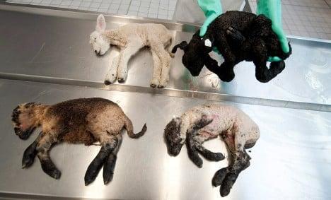 Virus lays low thousands of farm animals
