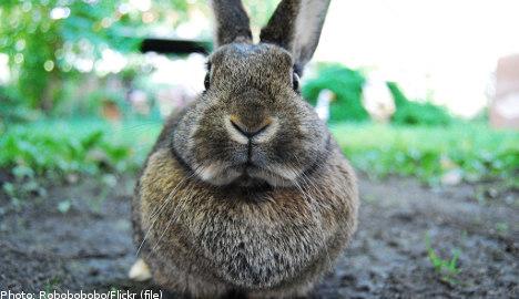 'Swedes should eat more rabbits': scientist