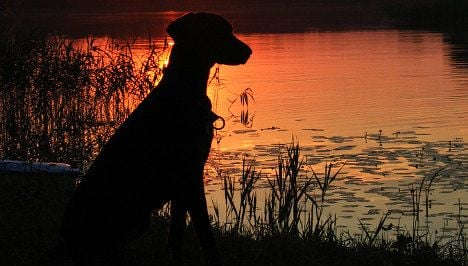Lethal parasite killing dogs in Switzerland