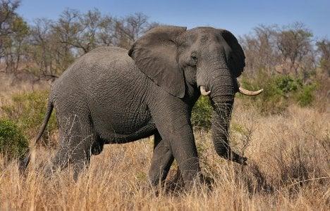 Scientist seeks deposits for elephant sperm bank