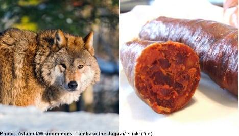 Poison sausage plot targets Sweden's wolves
