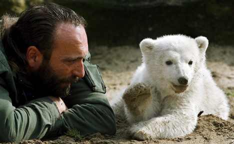 Berlin zoo braces for flood of Knut mourners