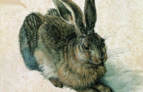 Dürer's Easter favourite – hare to stay