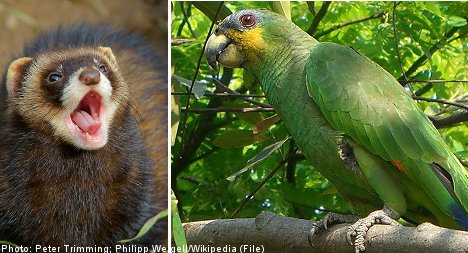 20 parrots massacred: 'It was no ferret'