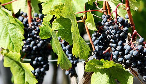 Presidential hopefuls reveal love of wine