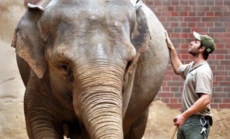 Long-awaited elephant baby dies