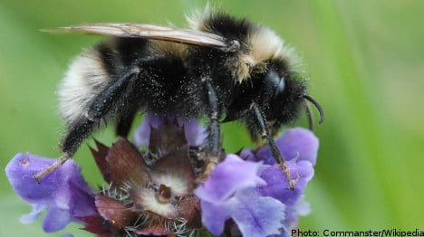 Bumblebee researchers 'threatened' by bee fans