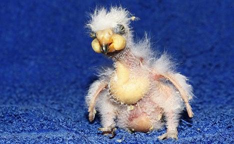 'Is it my looks?' Parent parrots kick out Nelson