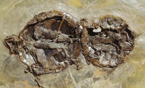 Shell-shocked scientists dig up ancient turtle orgy