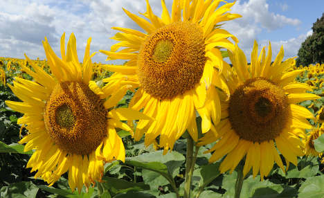 Here comes the sun, say forecasters