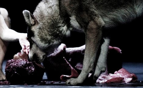 Live wolves in dance show 'the latest shock'