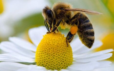 Plant wildflowers not corn, say beekeepers