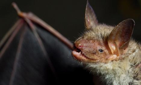 Man missing after rabid bat attack