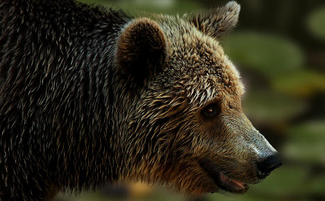 Motorist hits bear after avoiding elk