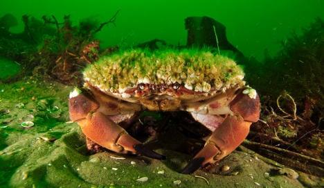 German seas 'among best in the world'