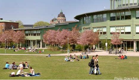More Swedish students choose university