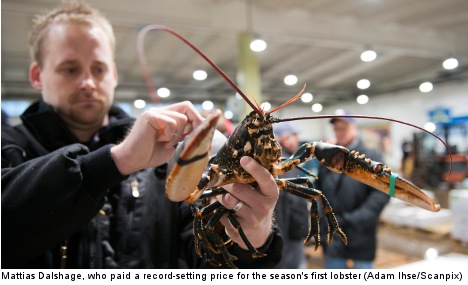 Season's first lobster nets record-high price