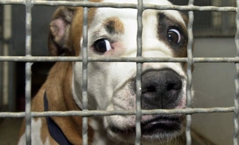 Canine lovers protest for dogs' rights