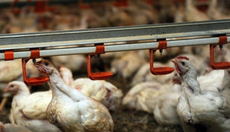 Cabinet agrees law to reduce drugs in meat