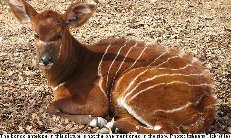 Swedish zoo in animal killing 'cover-up'