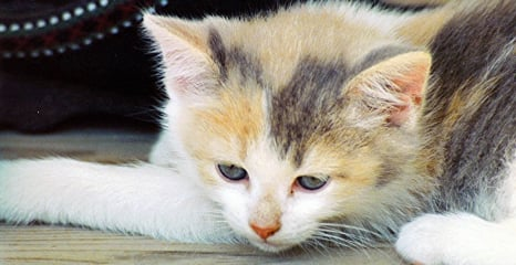 Kitten saved from wall of Avignon court