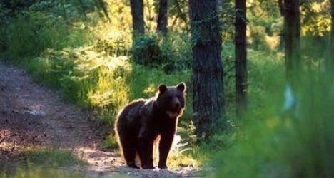 Brown bear targeted as Swiss Alps nuisance