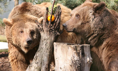 Protesters occupy Berlin bear compound