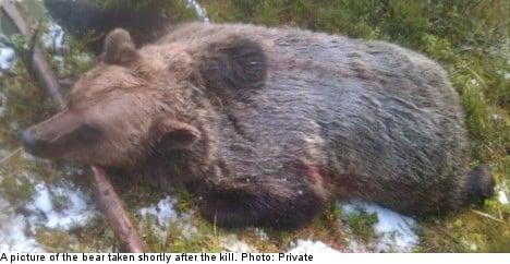 'It was me or the bear': Swedish hunter