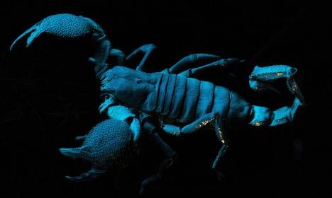 Dog finds giant scorpion on Munich street