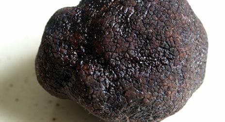 Climate change imperils French truffles