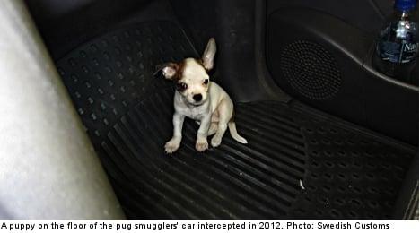 Swedes warned over new breed of dog smugglers