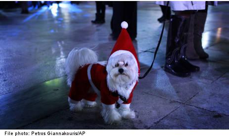 Vets warn of Christmas pet perils