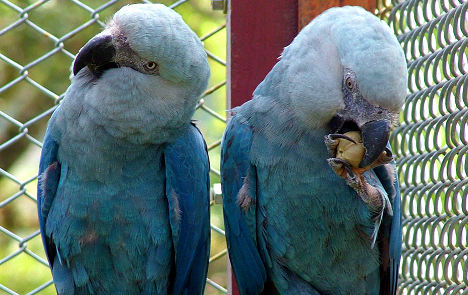 Man sues teflon oven tray firm over dead parrots