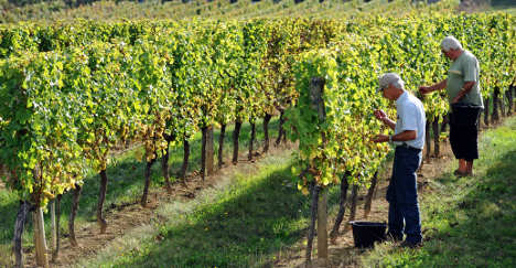 France's wine industry facing green future