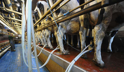 Cancer-causing fungus found in raw milk