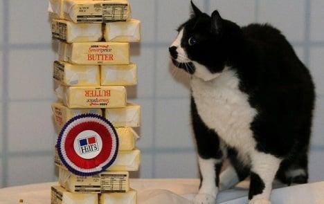 Merkel: fat cat packages must slim down