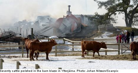 Police detain four over cow-killing blaze