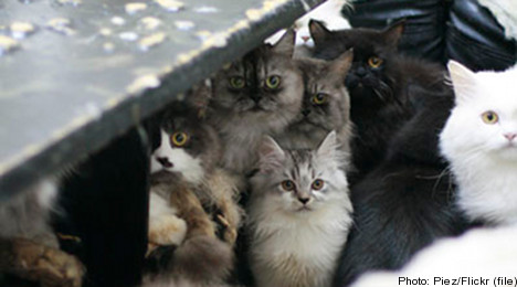 Suspected serial cat killer arrested