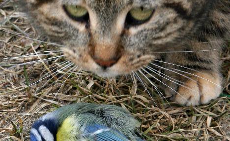 German tackles bird deaths with cat tax idea