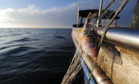 Lake Constance fishers fret: waters 'too clean'