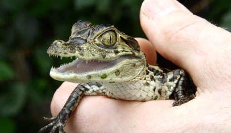 German man's crocodile passion attracts tourists