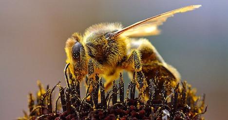 Greenpeace targets Syngenta on bee deaths
