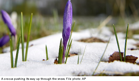 Blizzard warning crushes Swedes' spring hope