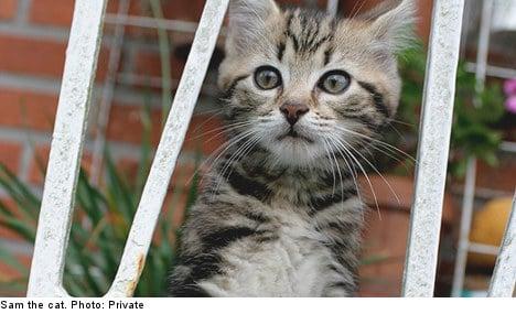 Rogue hunter kills Swedish family's pet cat