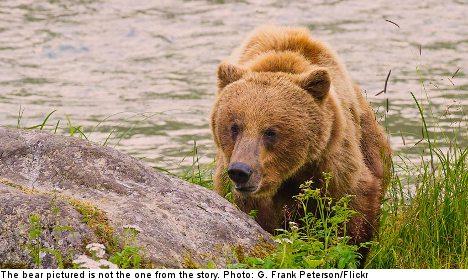 Swedish man mauled in brutal bear attack
