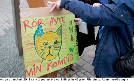 Online threats against teen cat killer