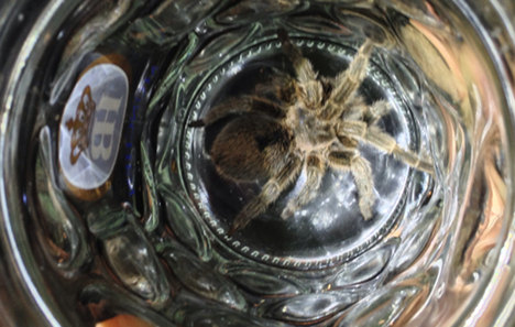 Cops call spider man after catching tarantula