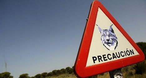 'Most fragile' Spain tops endangered species list