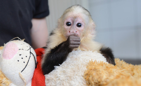 Germany pets Justin Bieber's monkey